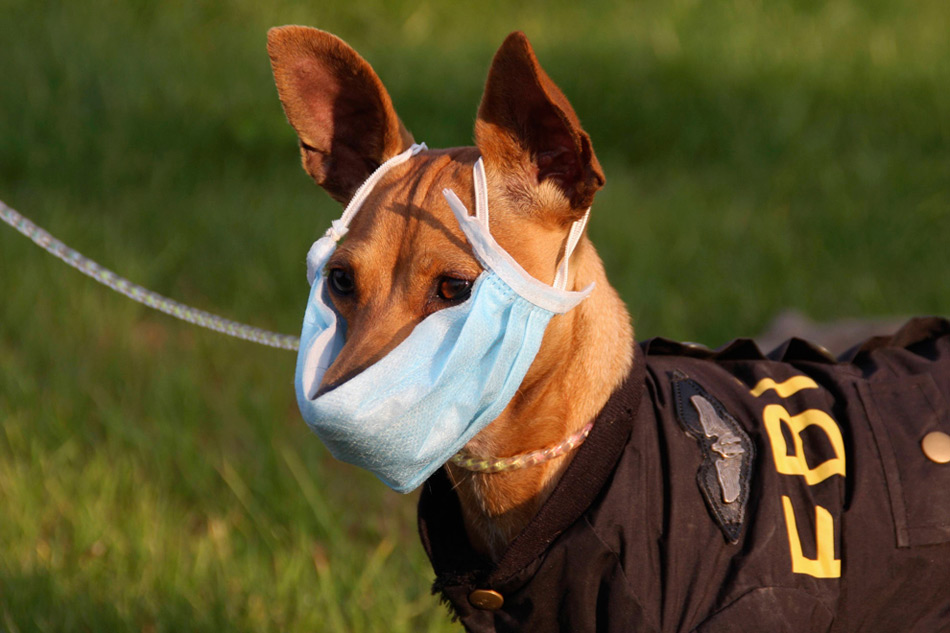 29. Собака в защитной маске против вируса гриппа H1N1 на улице в Энши, провинция Хубэй, Китай, 5 ноября 2009 года. (REUTERS/China Daily)
