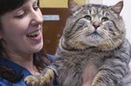 Кот в книге рекордов гиннеса фото