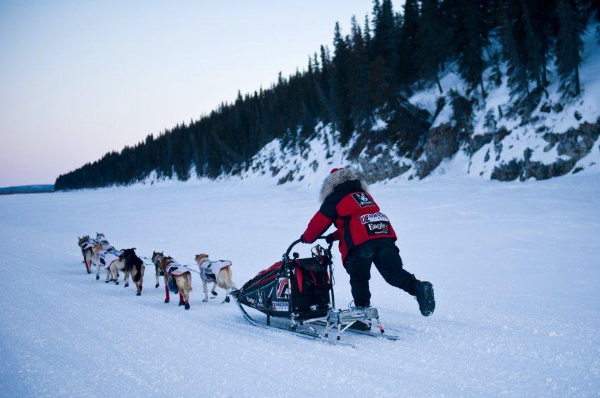 Гонка на собаках на Аляске