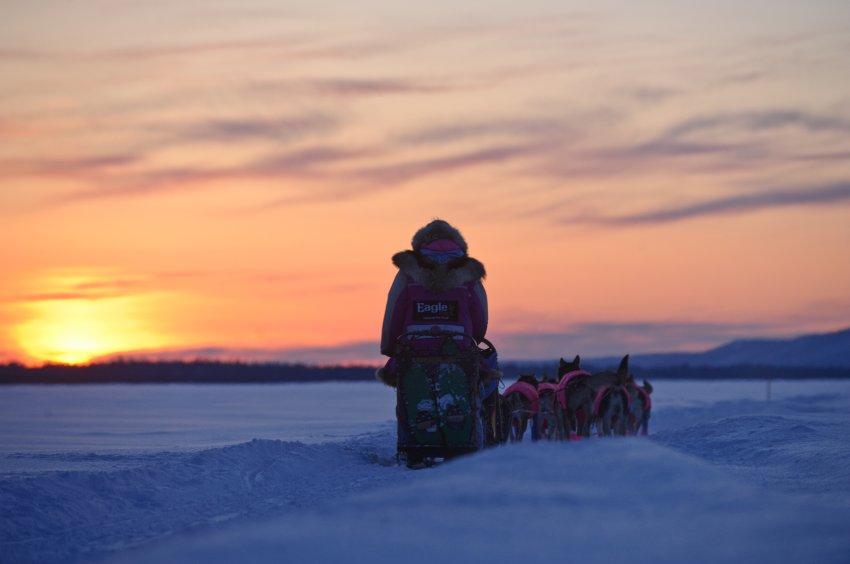 11 конкурентов в гонке на Аляске
