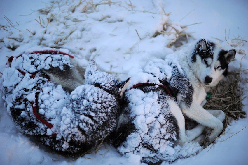 Отдых для собак