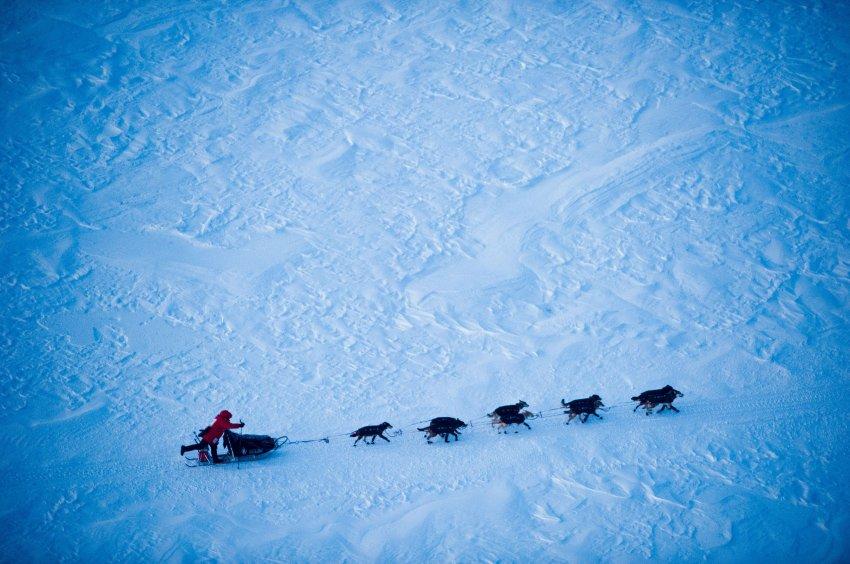 Гонки на Аляске, самые длинные и жесткие гонки на собачьих упряжках в мире
