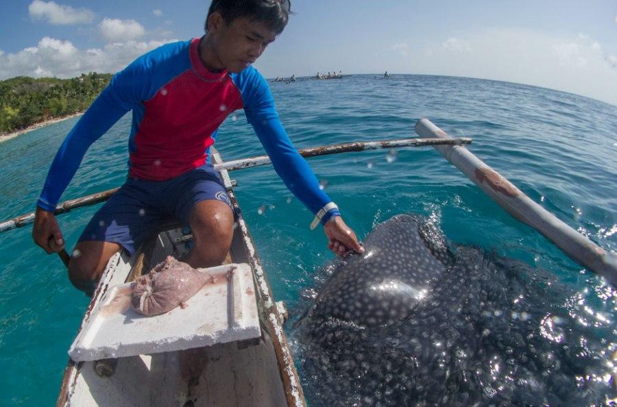 Акул приманивают кормом из крабов