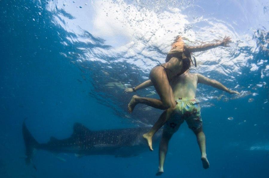 Плавание с акулами - популярное развлечение