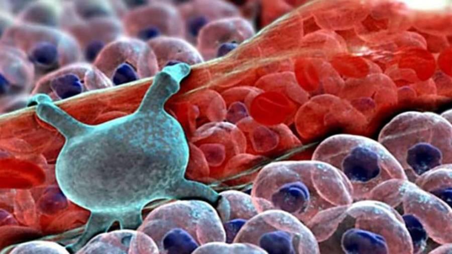 Перицит на стенке кровеносного сосуда
