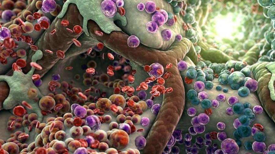 Мультипотентные стволовые клетки в костном мозге