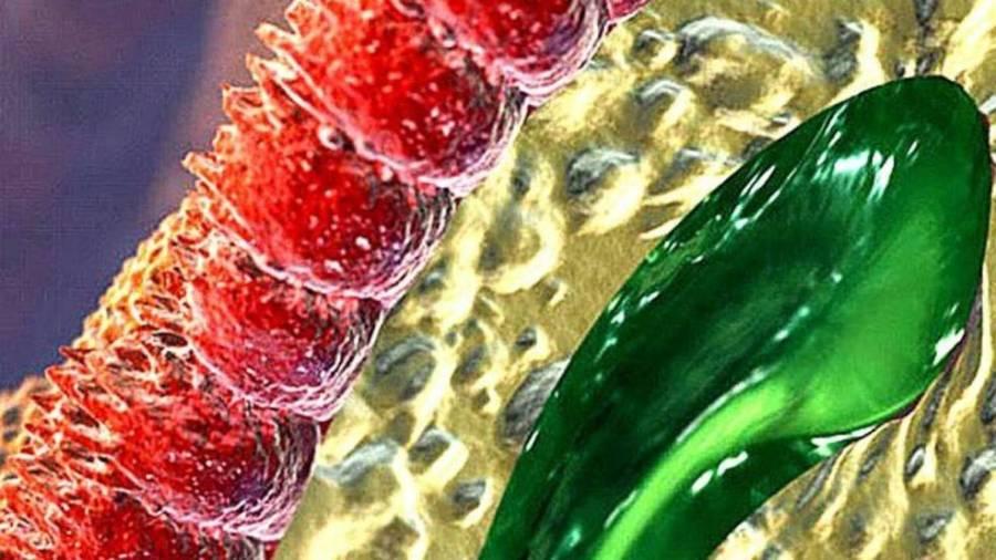 Микровилли (красные) в кишечнике