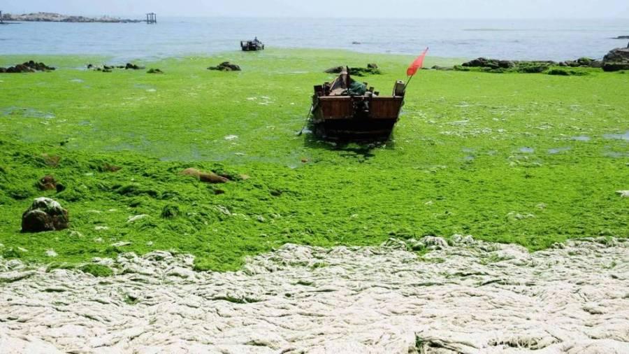 Зеленое море в Циндао