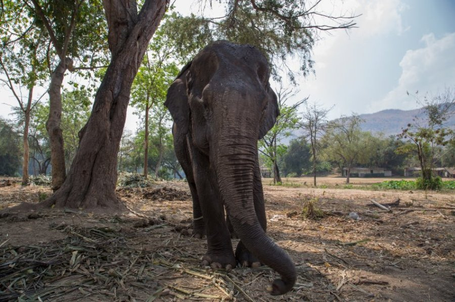 Люди и слоны