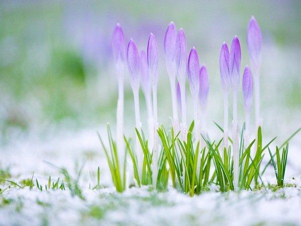 Магическая сила весны