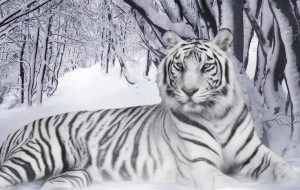 Год белого тигра