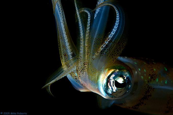 Подводный мир Марка Робертса