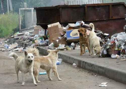 Немцы против безнадзорных псов: отпугиватели собак ни к чему