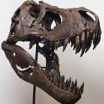 Динозавр забодал бы барана
