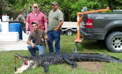 Огромного аллигатора поймали на удочку