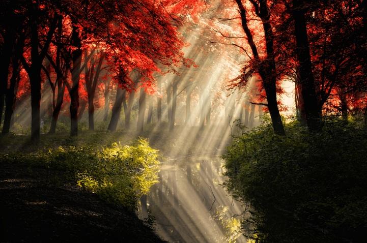 Природа, пейзаж - Lars Van de Goor