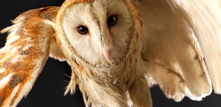 Живая природа - Lennette Newell