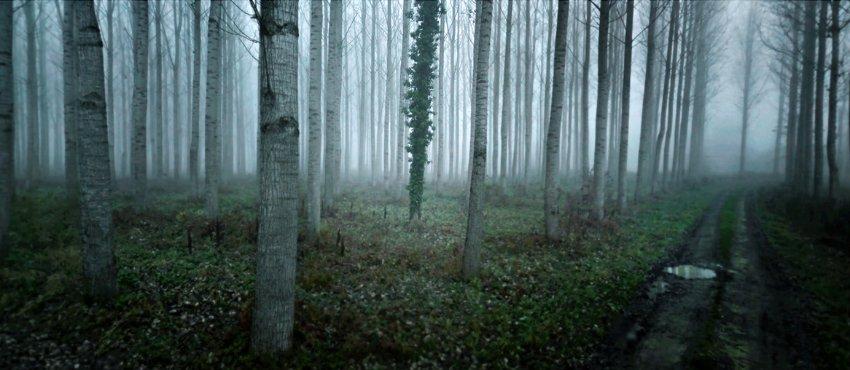 Осень в лесной полосе в Saint-Nicolas-де-ла-Grave, Франция
