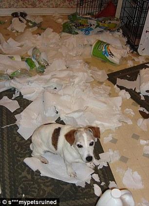 Уничтожение всего запаса туалетной бумаги