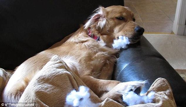Полный рот доказательств, уничтожения диванной подушки