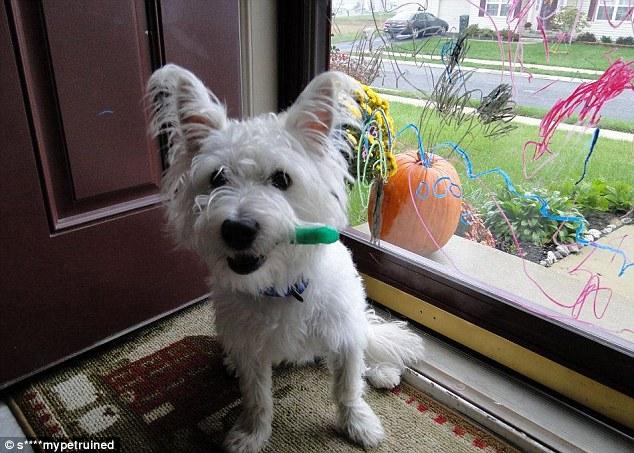 Собака, разрисовывающая окна