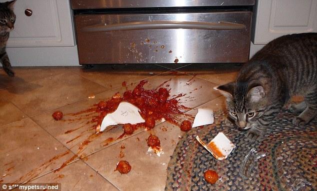 Кот решил, что тоже заслуживает часть итальянских фрикаделек