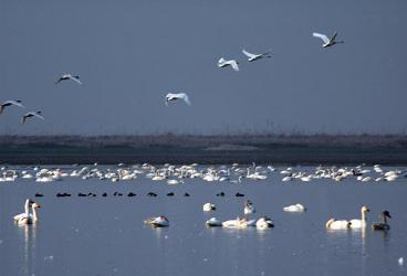 Птицы на озере Поянг