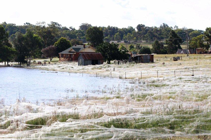 Благодаря влажному климату численность пауков увеличилась многократно