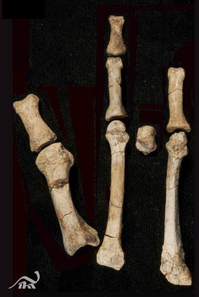 8 фрагментов костей ранее неизвестного вида человека