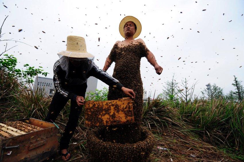She Ping облачается в костюм из пчел