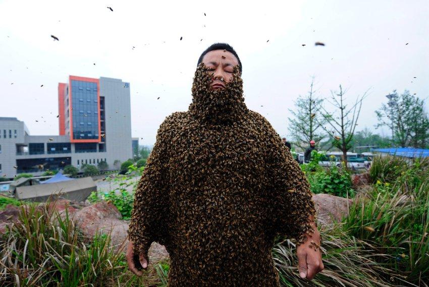 Мировой рекорд из 33,1 кг пчел