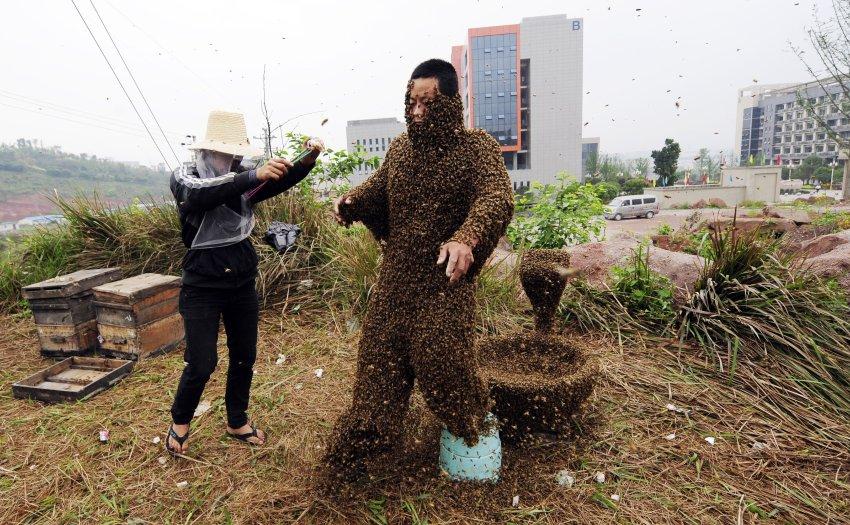 Пчелы покрыли почти все тело