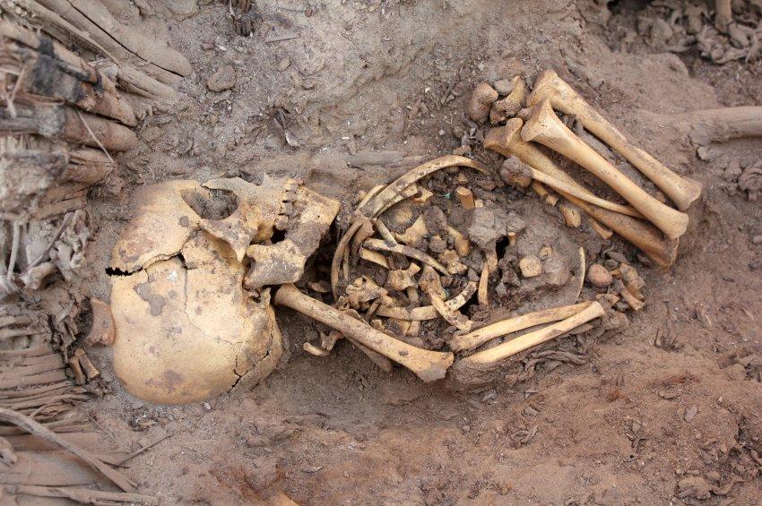 Скелет из массового захоронения