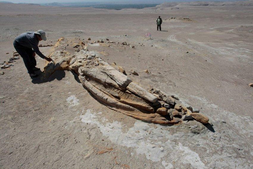 Окаменевшие скелеты китов в пустыне Окукайе