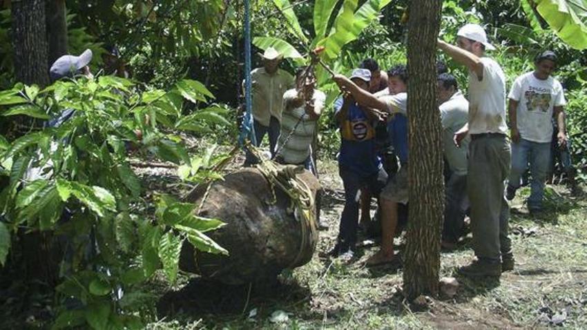 Учёные вытаскивают статую из реки