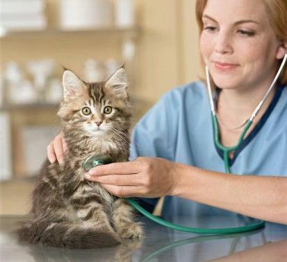 Посещение ветеринарной клиники
