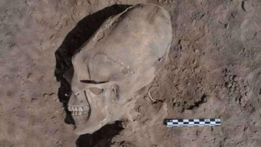 """Этот череп напоминает по форме голову инопланетянина из фильма """"Чужой"""""""
