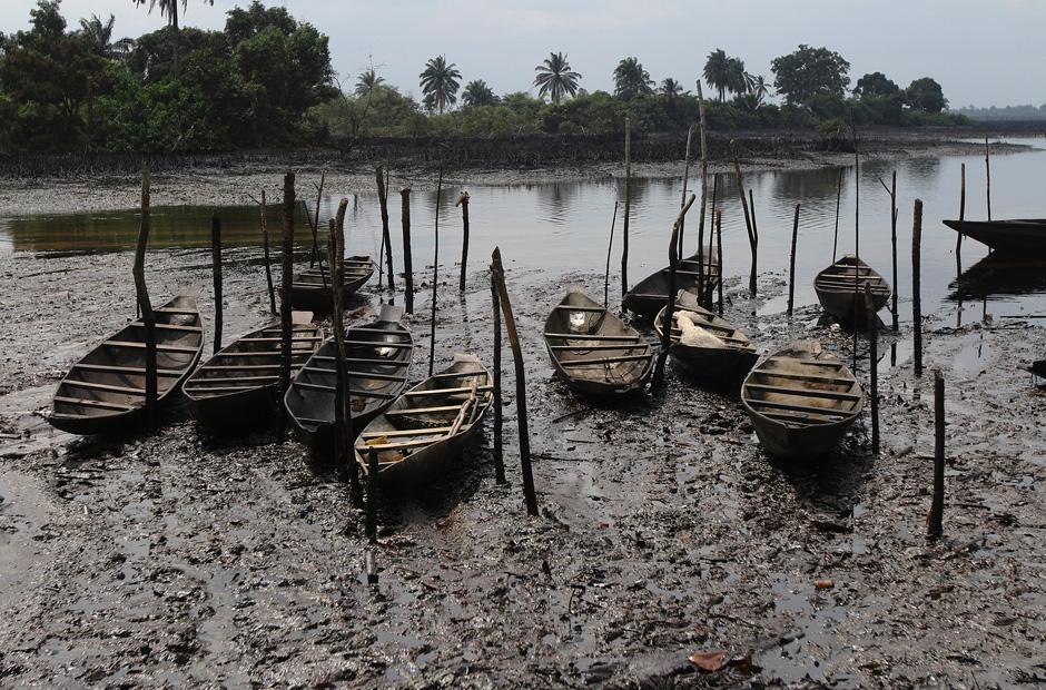 Сырую нефть доставляют на лодках. Когда-то на берегу реки Бодо росли мангровые деревья.  Сегодня он весь залит нефтью.