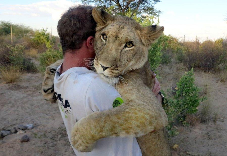 Тесная дружба льва и человека