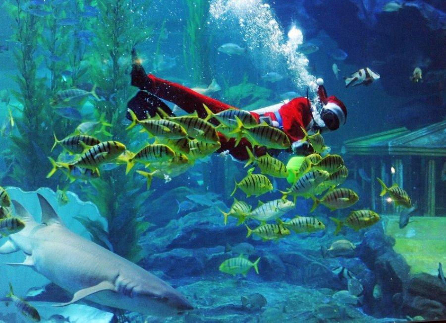 Рождество для рыб. Аквариум в Китае.