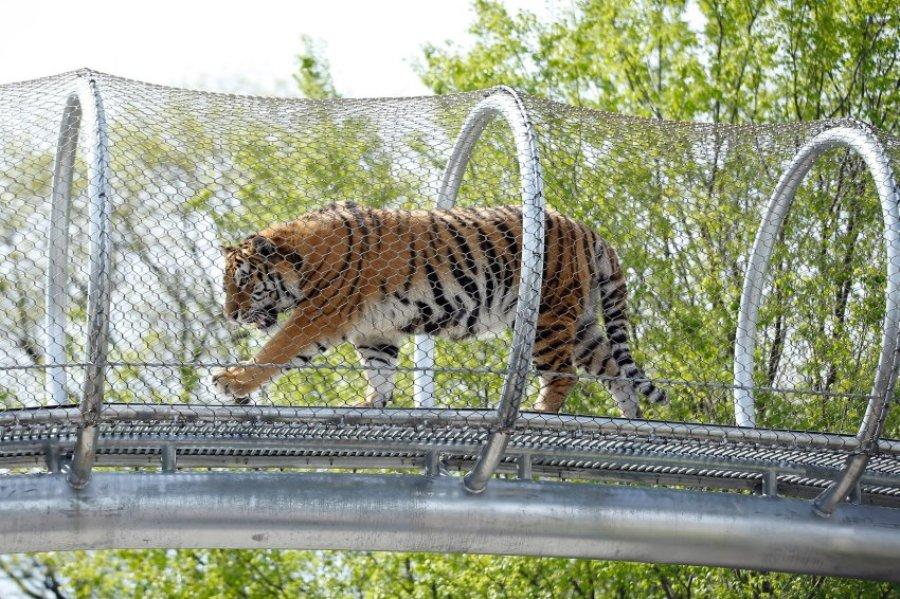 Новые клетки для тигров